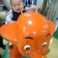 慶太象に乗る!!
