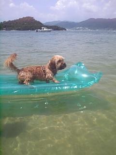 サーフィン♪(<br />  #^O^#)