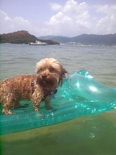 サーフィン♪〜其の2(<br />  #^O^#)