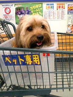 お買い物〜♪o(^-^)o