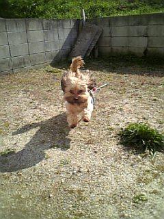 お庭でダッシュ(^O^)